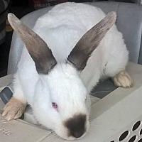Adopt A Pet :: Carlos - Holbrook, NY