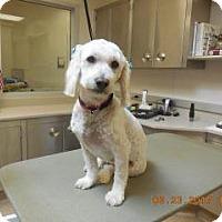 Adopt A Pet :: Susan - Wildomar, CA