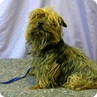 Adopt A Pet :: URGENT on 7/27@DEVORE San Bern - San Bernardino, CA