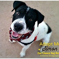 Adopt A Pet :: Simon - Queen Creek, AZ