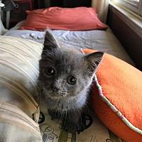 Adopt A Pet :: Chevy - Asheboro, NC