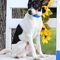 Adopt A Pet :: Tonka - Waldorf, MD