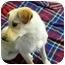 Photo 4 - Terrier (Unknown Type, Small)/Labrador Retriever Mix Dog for adoption in YERINGTON, Nevada - Sarah