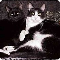 Adopt A Pet :: Lefty & Pancho (Buddies!) - Portland, OR