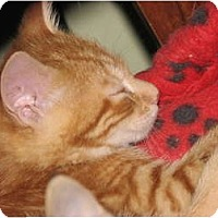 Adopt A Pet :: Flame and Flicker - Richfield, OH