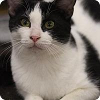 Adopt A Pet :: Pineapple - Sacramento, CA