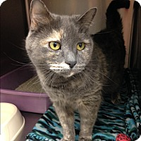 Adopt A Pet :: Franky - Newport Beach, CA