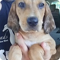 Adopt A Pet :: Wes - Gainesville, FL