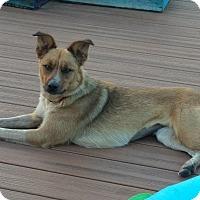Adopt A Pet :: Ginger - Ogden, UT
