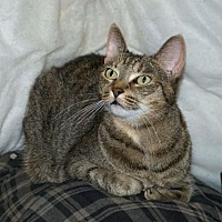 Adopt A Pet :: Bella (URGENT) - Sunderland, ON