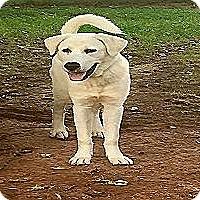 Adopt A Pet :: Vernon - Kyle, TX