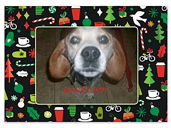 Beagle Dog for adoption in Ventnor City, New Jersey - DANNY BOY