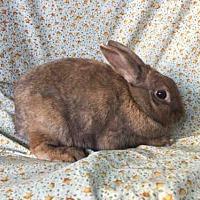 Adopt A Pet :: LUCILLE BALL - Goleta, CA