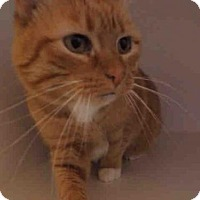 Adopt A Pet :: APRIL - Rockford, IL