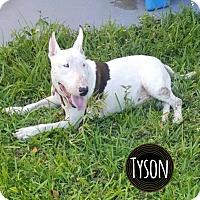 Adopt A Pet :: Tyson - Lake Worth, FL