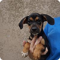 Adopt A Pet :: Mella - Oviedo, FL