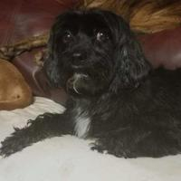Adopt A Pet :: Helix - Burlington, NC