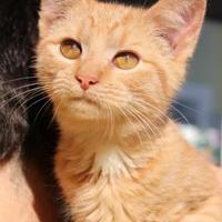 Adopt A Pet :: Sidekick - Bedford, VA