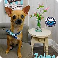 Adopt A Pet :: Jaime - Arcadia, FL