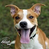 Adopt A Pet :: Diesel - Lyons, NY
