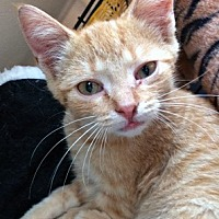 Adopt A Pet :: Chivers - Mississauga, Ontario, ON
