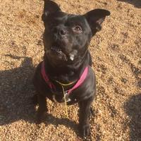 Adopt A Pet :: Keegan - Fairfax Station, VA