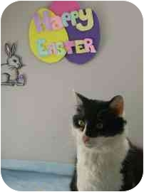 Domestic Mediumhair Kitten for adoption in North Charleston, South Carolina - Blossom
