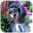 Photo 2 - Lhasa Apso Mix Dog for adoption in Los Angeles, California - MONKEE & REGIS