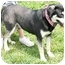 Photo 2 - Husky/Hound (Unknown Type) Mix Dog for adoption in Cincinnati, Ohio - Yuki
