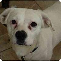 Adopt A Pet :: Judie - Raleigh, NC