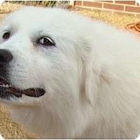Adopt A Pet :: Ella -Adopted - Oklahoma City, OK