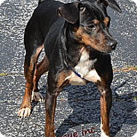 Adopt A Pet :: Kali - Miami, FL