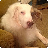 Adopt A Pet :: Ty - Madison, WI