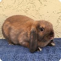 Adopt A Pet :: Chai - Bonita, CA