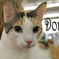Adopt A Pet :: Dora - Wichita Falls, TX