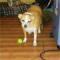 Adopt A Pet :: Shorty - LaBelle, FL