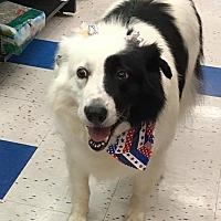 Adopt A Pet :: Nicole - Las Vegas, NV