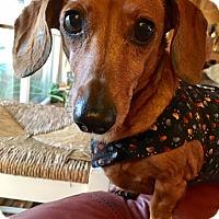 Adopt A Pet :: VIENNA - Portland, OR