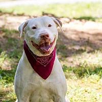 Adopt A Pet :: Caleb - Ashland, KY