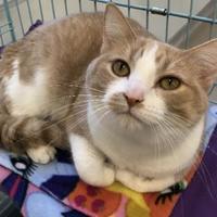 Adopt A Pet :: Clover - Washington, IA