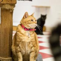 Adopt A Pet :: Pumpkin - Thomasville, GA