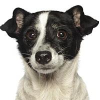 Adopt A Pet :: Minion - oakland park, FL