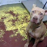Adopt A Pet :: CADET - Atlanta, GA