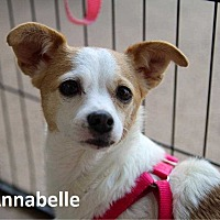 Adopt A Pet :: Annabelle - Lake Forest, CA