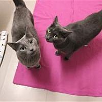 Adopt A Pet :: Nadia - Raleigh, NC
