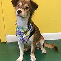 Adopt A Pet :: BOBBY - Fort Pierce, FL