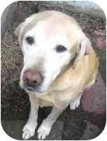 Labrador Retriever/Retriever (Unknown Type) Mix Dog for adoption in Bloomsburg, Pennsylvania - Moose