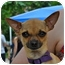 Photo 1 - Chihuahua Mix Dog for adoption in Austin, Texas - Parker