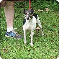 Adopt A Pet :: Missy - Thomasville, NC