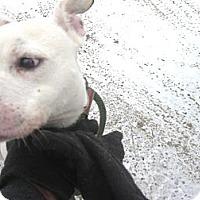 Adopt A Pet :: #020-14  @ Animal Shelter - Zanesville, OH